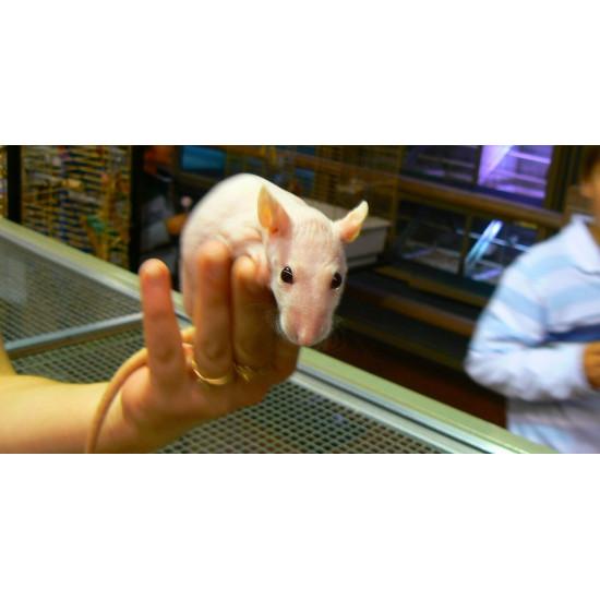 Rat nu de  dans Nos conseils