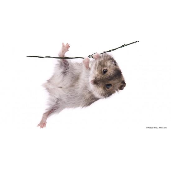 Hamster Russe de  dans Nos conseils