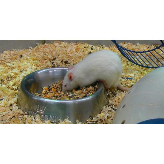 Rat blanc de  dans Nos conseils
