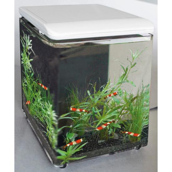 Aquarium home 8 blanc de Superfish - Aquadistri - accessoires pour aquarium et bassin dans - de 60 Litres