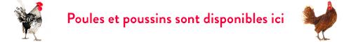 poule poussin à Bordeaux et Libourne