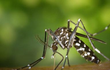 Comment éradiquer les moustiques ?
