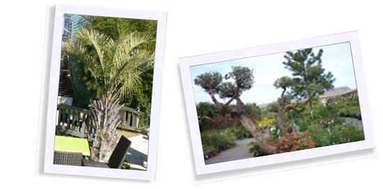 jardinerie animalerie bordeaux saint medard jardinerie dupoirier jardinerie dupoirier. Black Bedroom Furniture Sets. Home Design Ideas
